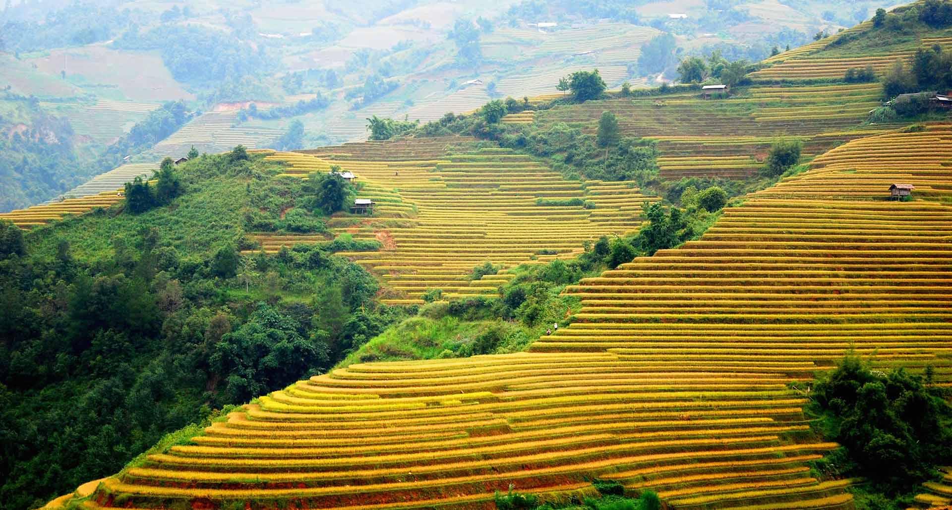 Hanoi – Mu Cang Chai – Halong – Ninh Binh 7D6N